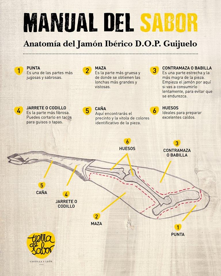 Anatomía del Jamón Ibérico D.O.P Guijuelo